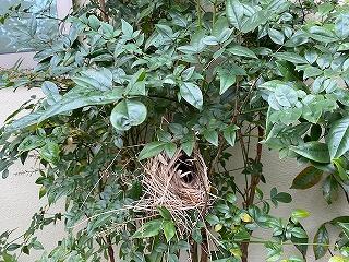 鎌倉日和【鳥の巣】